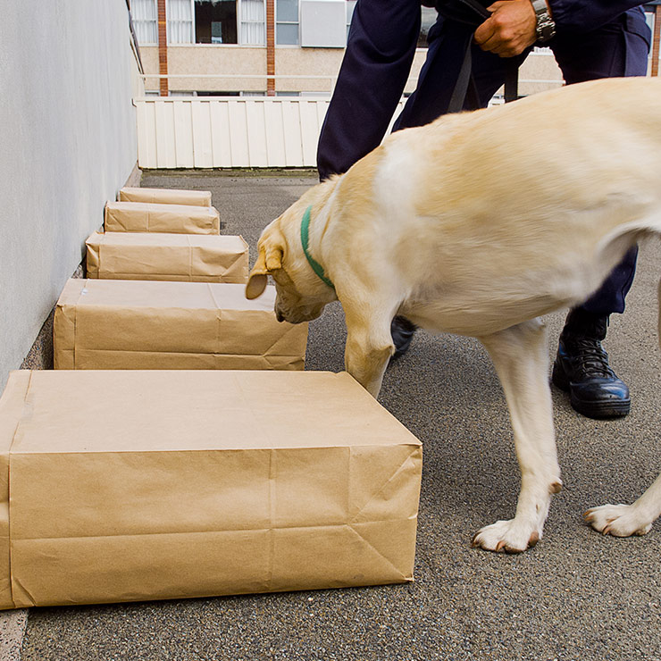 Sniffer dog sniffing around some boxes